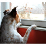 Two Unbearable Words: The Nature of Christian Hope (Part 1 of 2) - Weekly Blog Post by Dr. Craig Biehl - dog looking out window in winter