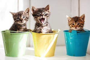 Gleaning from The Religious Affections (Part 11): Uncertain Sign Eight: Joy and Comfort Following Conviction and Mourning for Sin - Weekly Blog Post by Dr. Craig Biehl - kittens in colored buckets